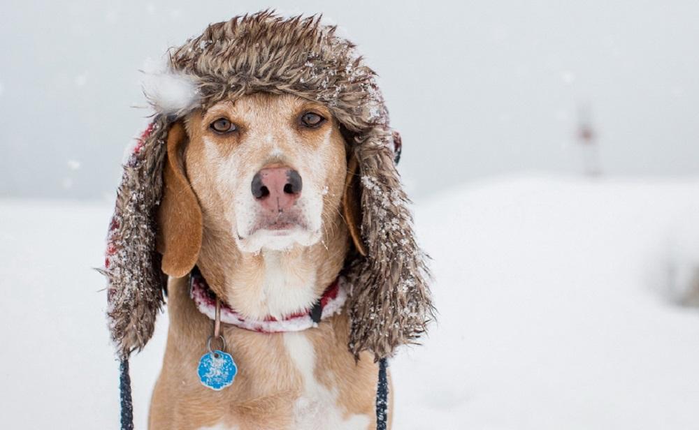 Погода в Челябинске в январе: идут экстремальные морозы