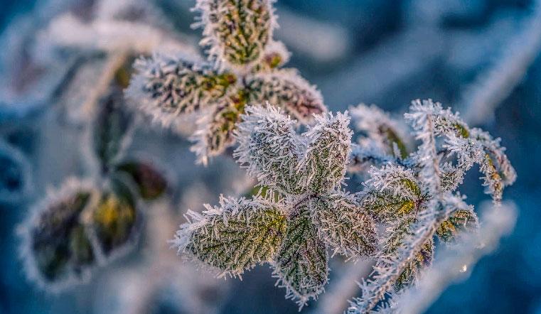 Морозы и скачки давления. Синоптики рассказали, какой будет погода в Челябинске