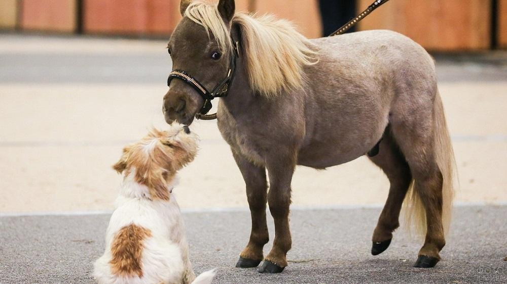 Размером с собаку. В Челябинской области появились самая маленькая лошадь