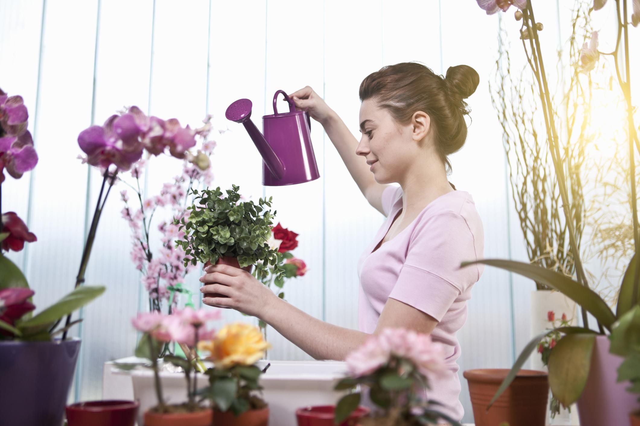 Приметы: 5 комнатных цветов расскажут о вашем будущем