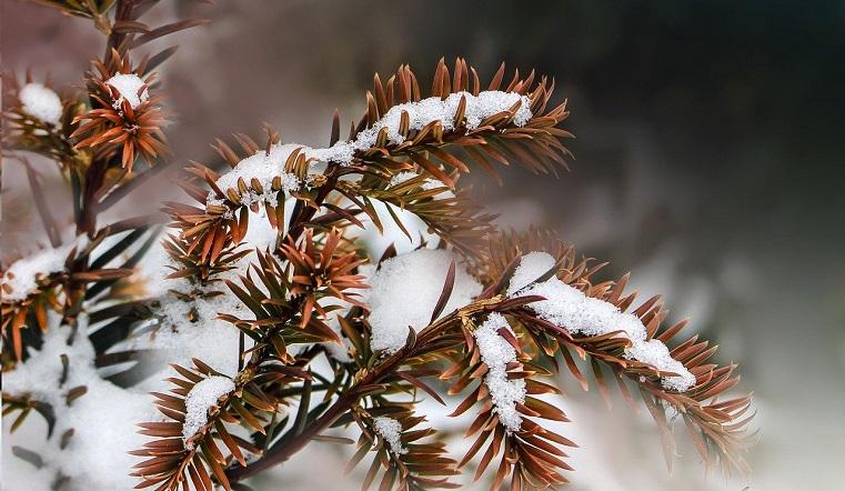 Природа удивляет. Синоптики рассказали, какая будет погода в Челябинской области