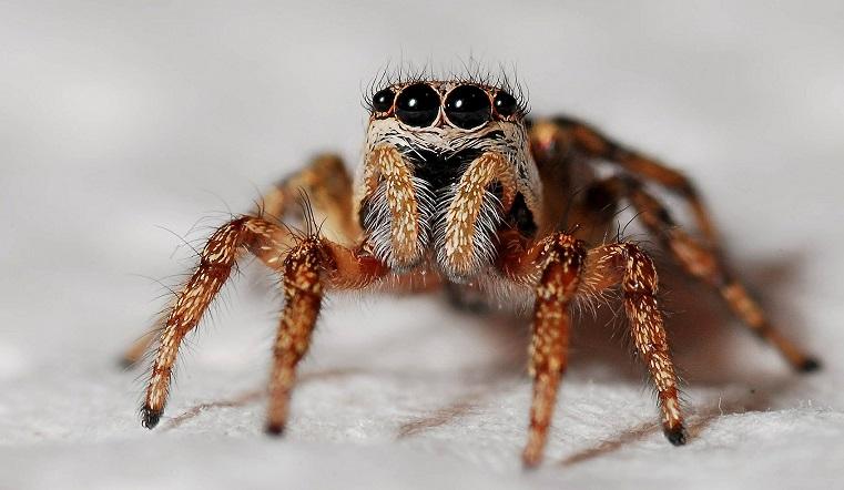 Не только фобии. Ученые объяснили, почему нельзя убивать пауков