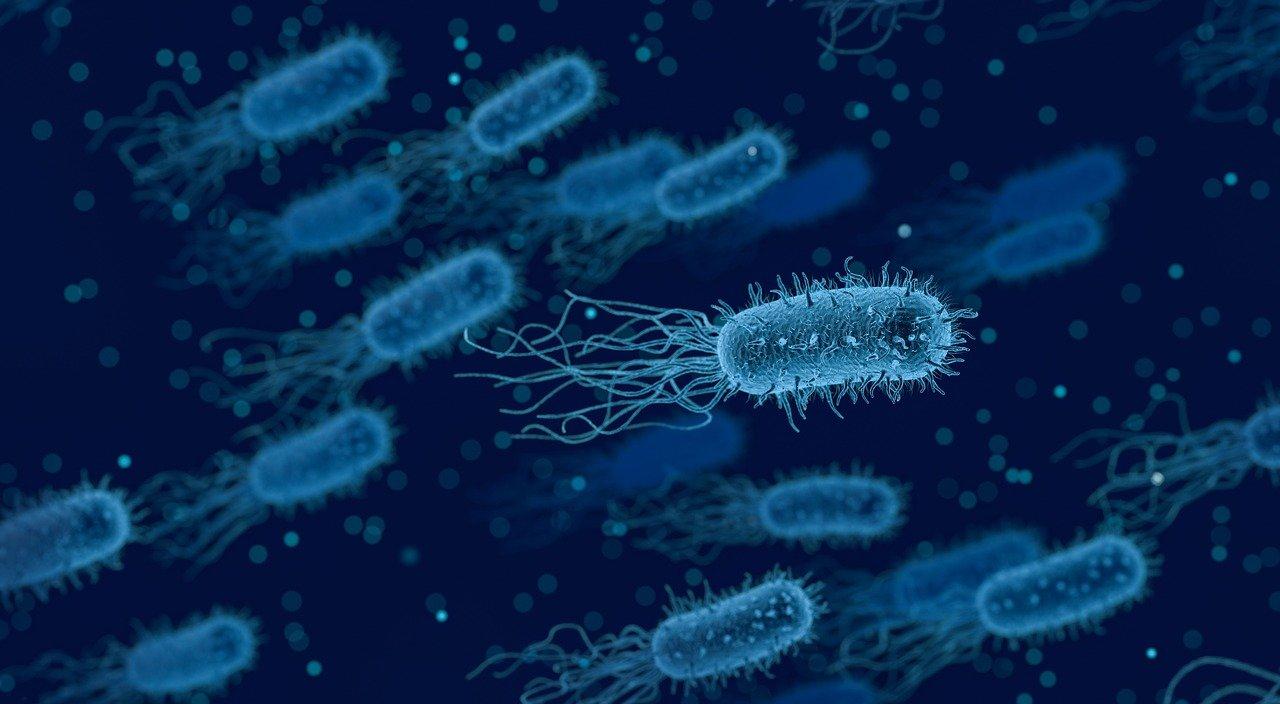 Ученые придумали способ истреблять бактерии, вызывающие менингит, пневмонию и заражение ран