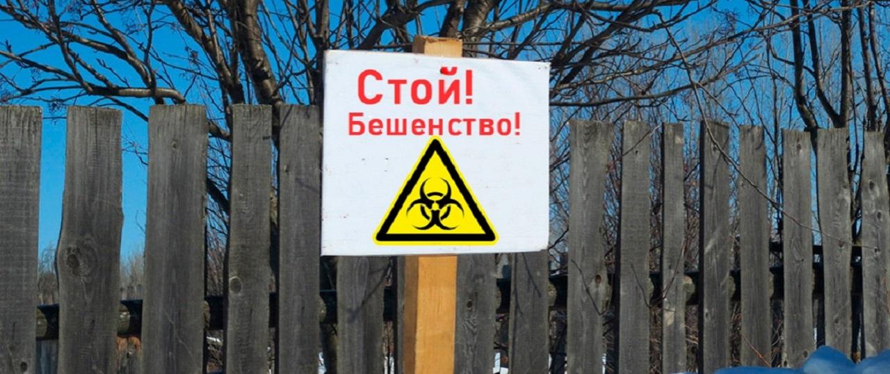 Объявлен карантин: очаг бешенства обнаружен в Челябинской области
