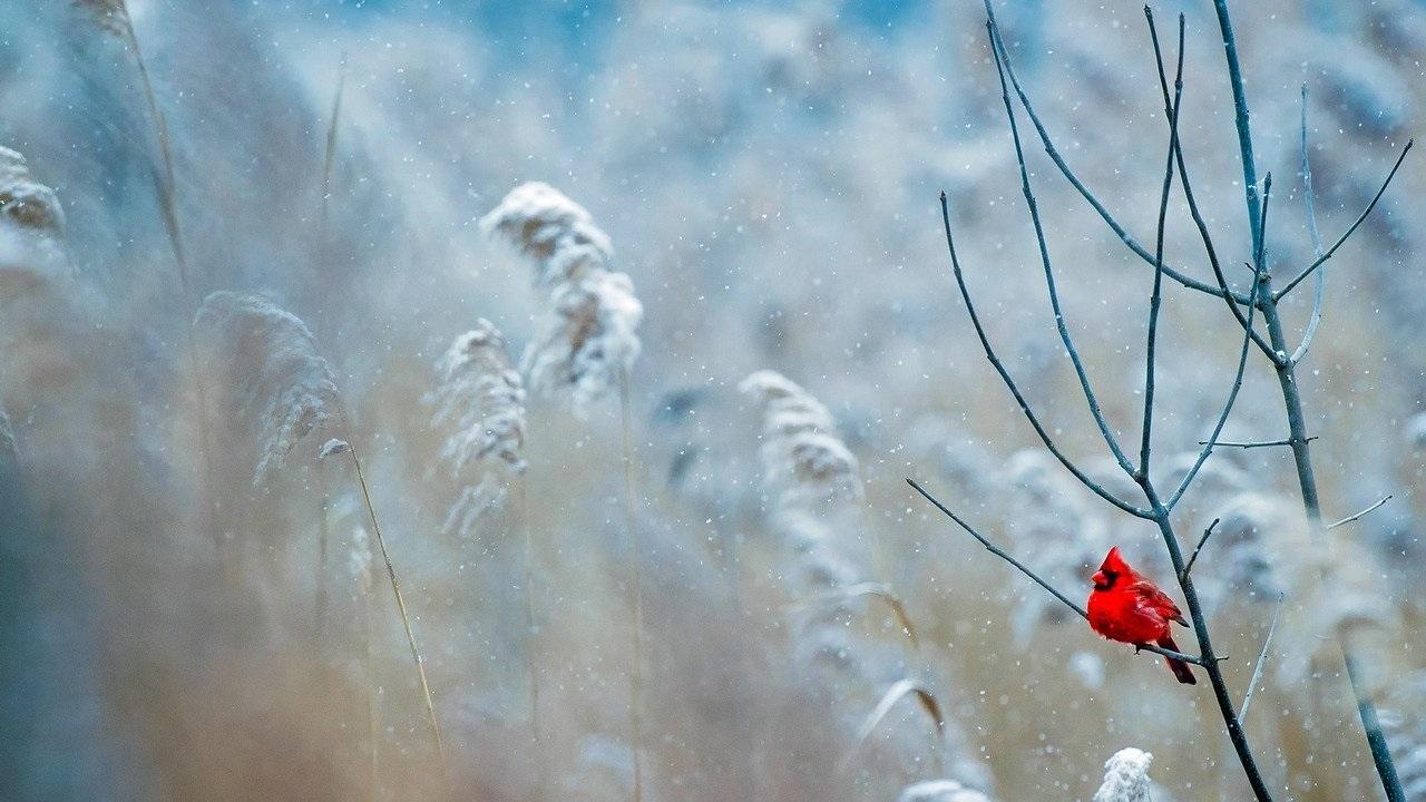 В Челябинской области прогнозируют метели и низкое атмосферное давление