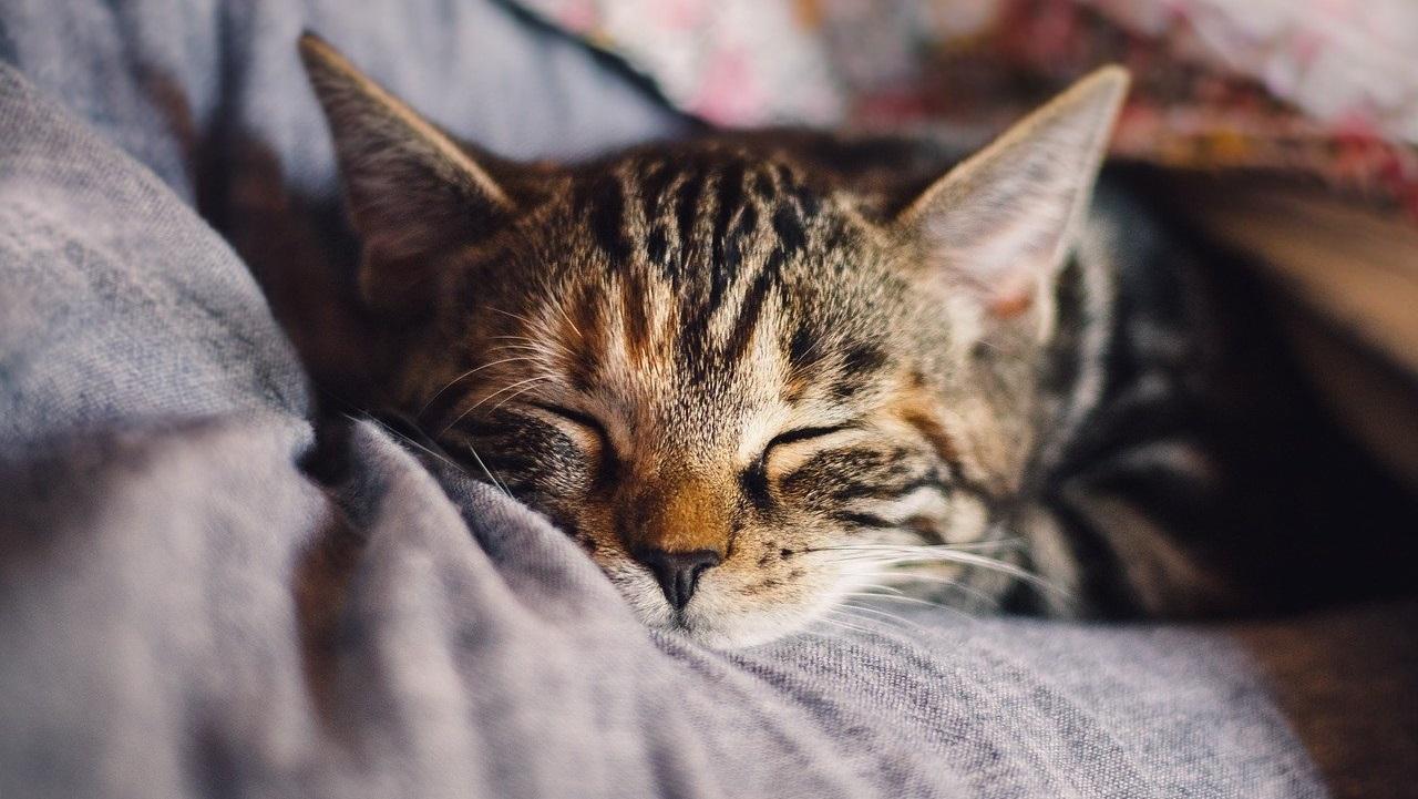Приметы на 26 января: кошка поможет заглянуть в будущее