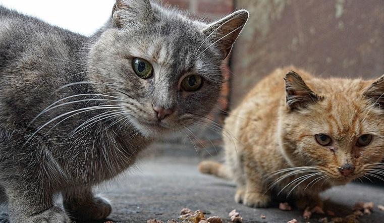 Голодные и запуганные. На Южном Урале волонтеры купили корм бездомным животным