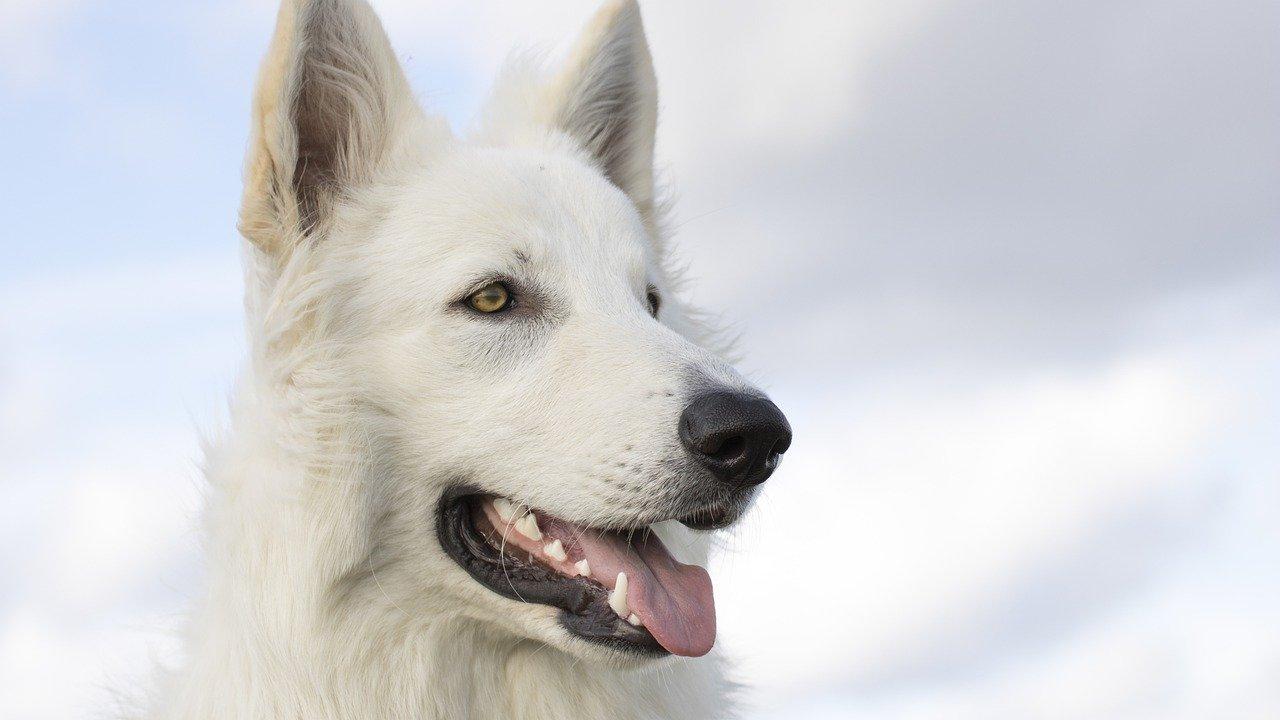 В Челябинской области появится первый государственный приют для животных