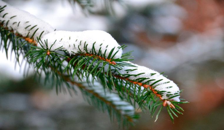 Морозы и снегопады. Синоптики рассказали, чем удивит погода в Челябинске