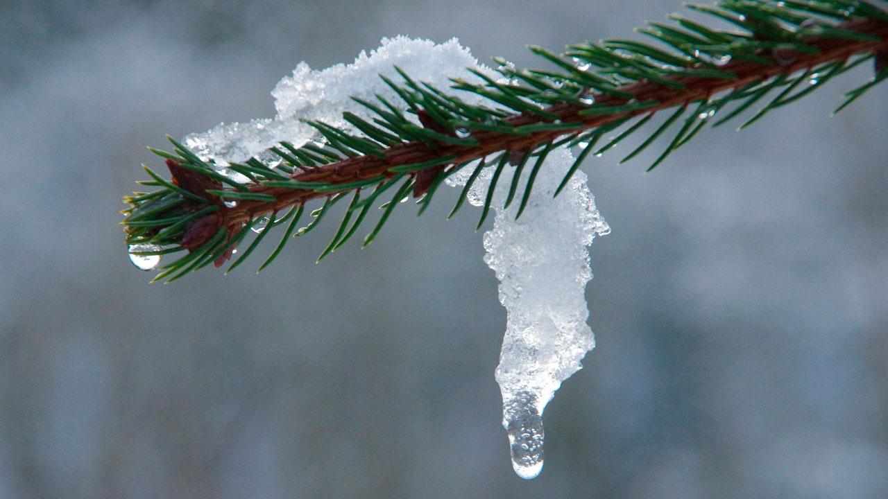 Челябинскую область ждет неделя аномального тепла