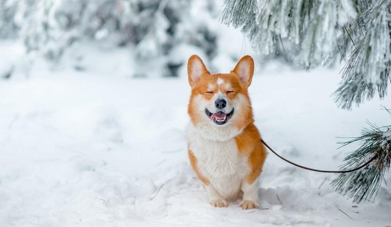Пушистый променад. В Челябинске владельцы собак ходят на коллективные прогулки