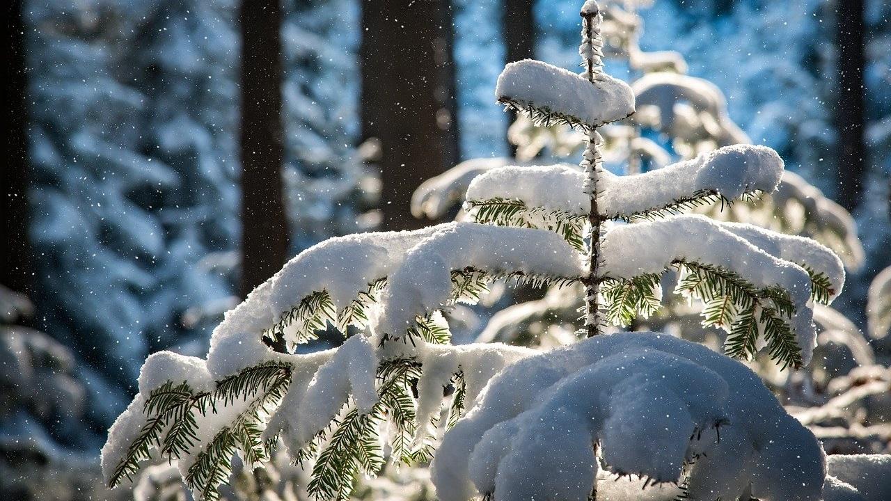 В Челябинской области потеплеет до +2 градусов
