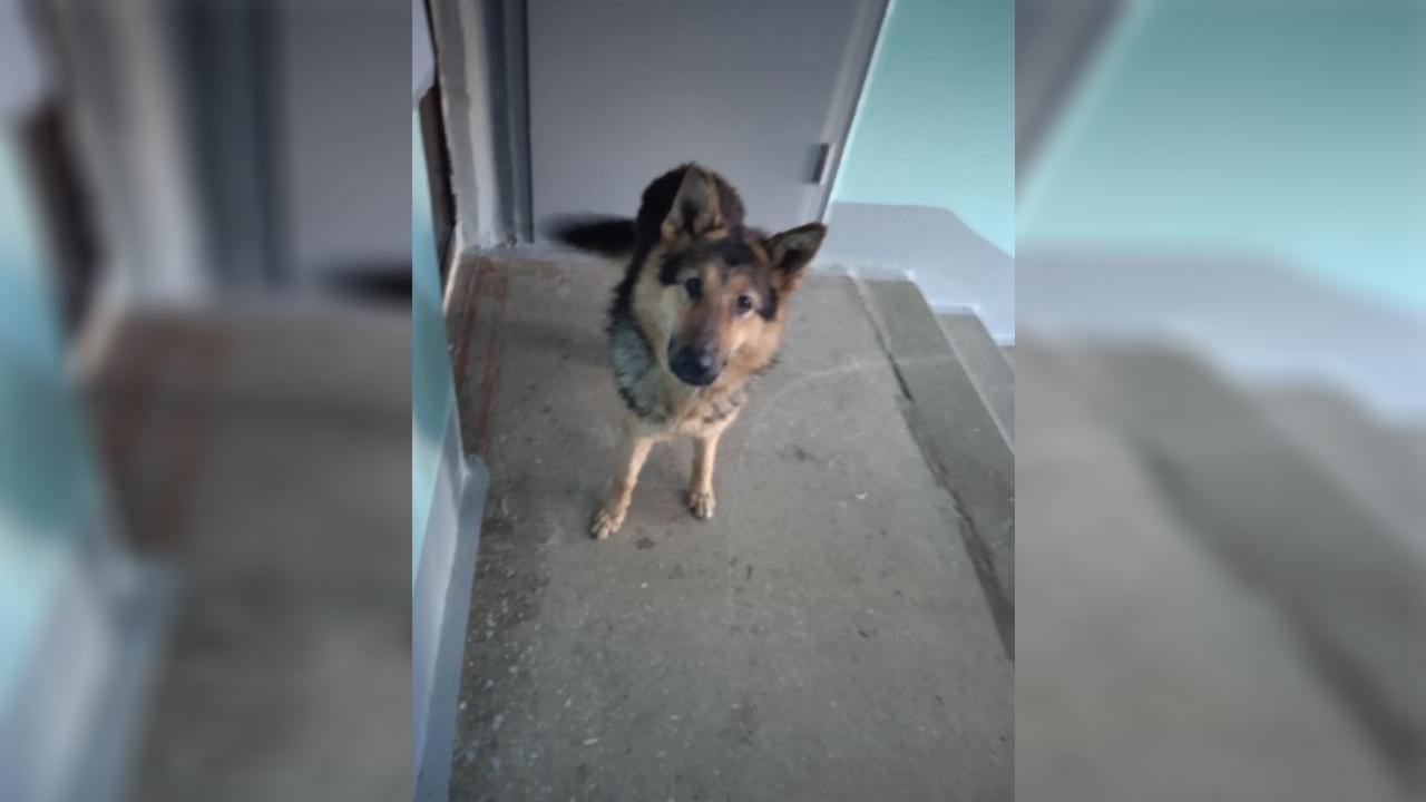 В Челябинской области изувечили собаку, выбросив из окна