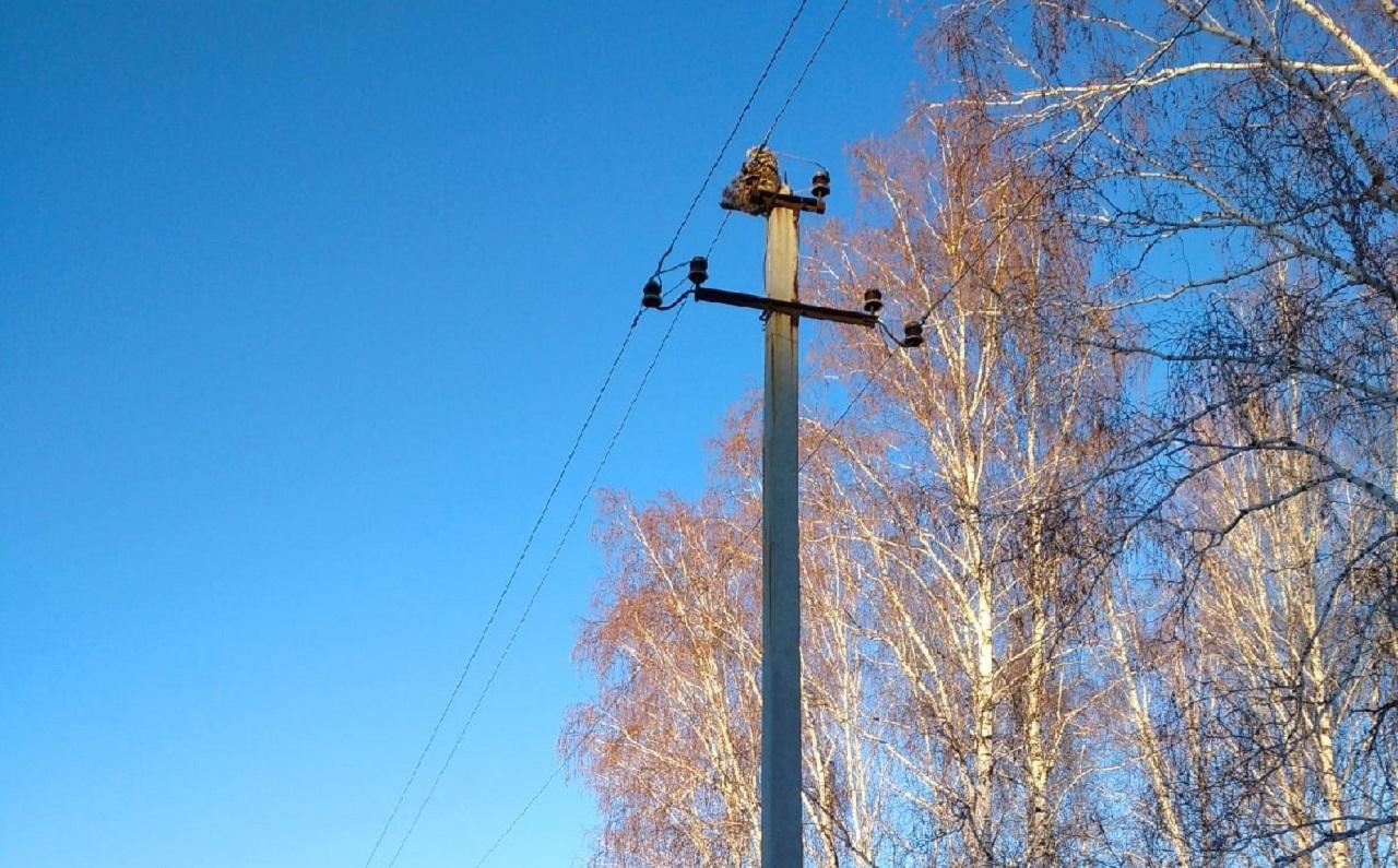 Птиц убивает током: орнитологи Челябинска бьют тревогу