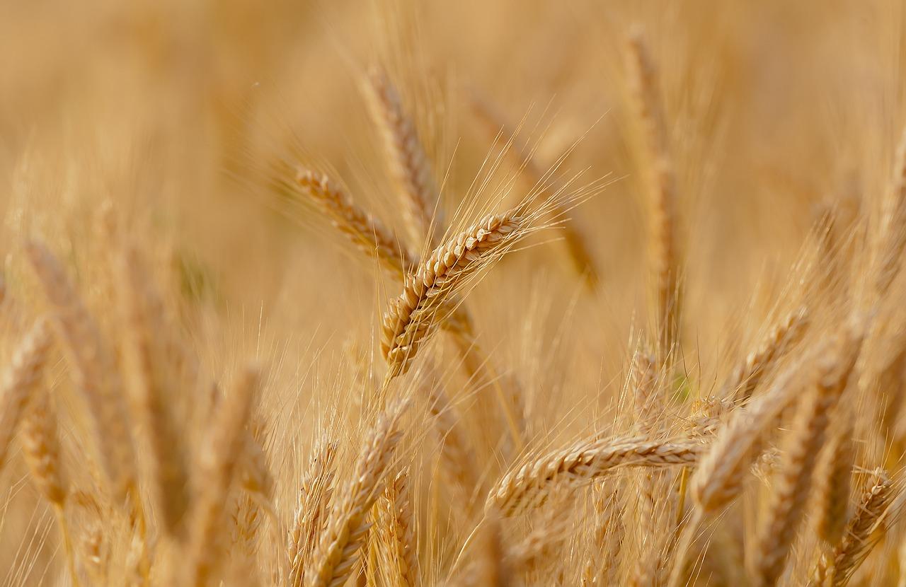 На Урале мошенник похитил зерно почти на 6 млн рублей