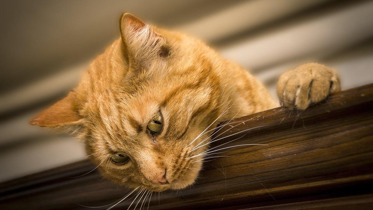 Мурлыкающий радар: как кошки указывают на «плохие» места в доме
