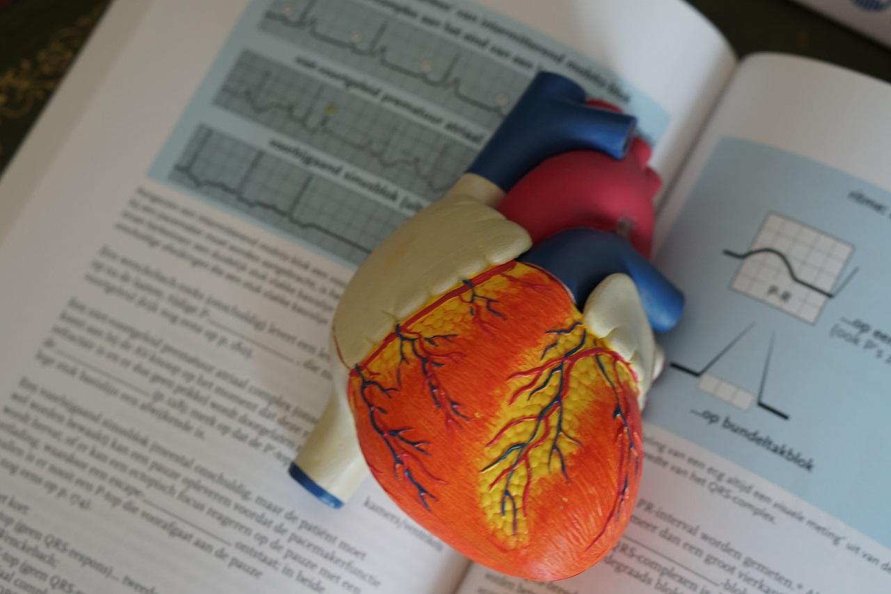 Кому не повезло: сколько ударов сердца вам отведено