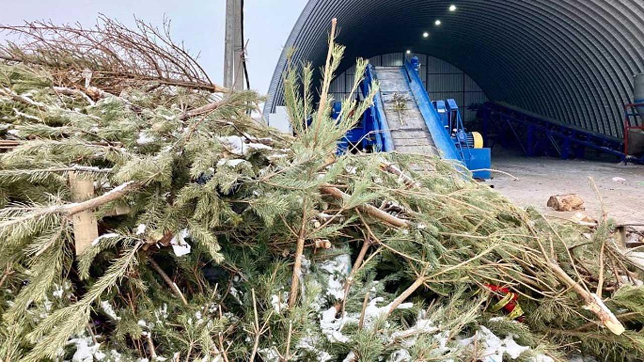 В Челябинской области начали делать топливо из новогодних елок