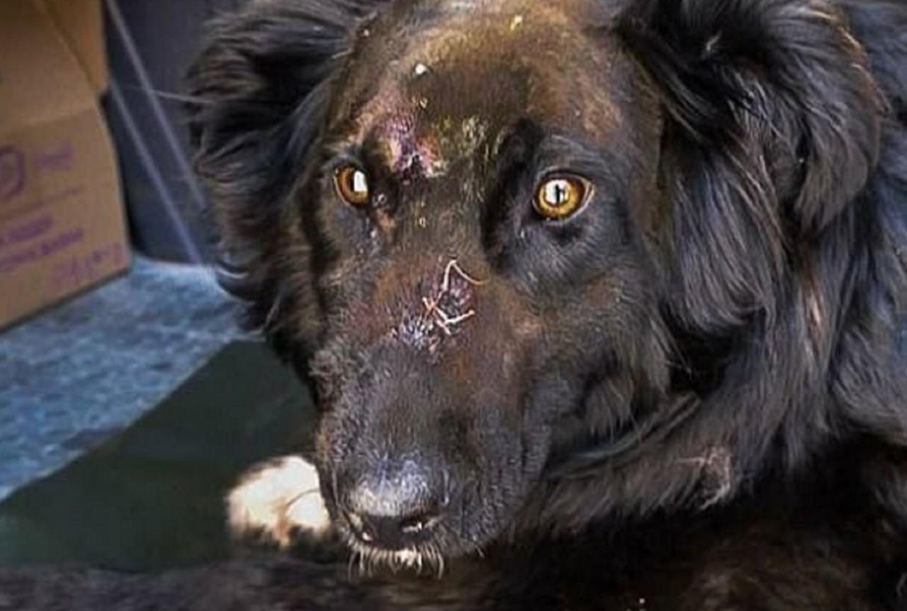 Дробь – даже в мозгу. Собаку в Челябинске расстреляли из ружья