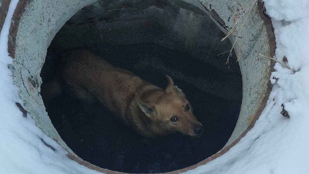 В Челябинской области прохожие спасли провалившуюся в люк собаку
