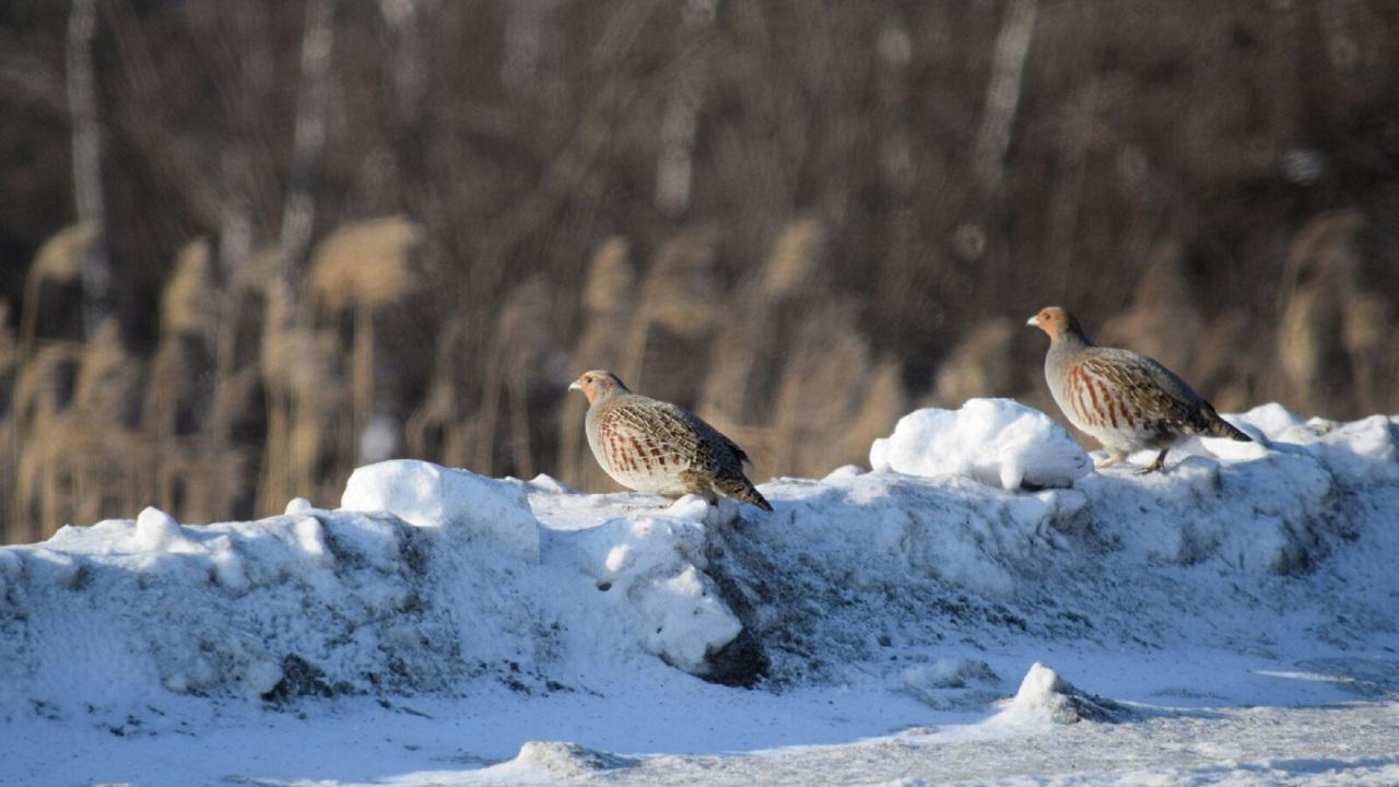 Cтая птиц-рекордсменок предсказала приход весны на Урале