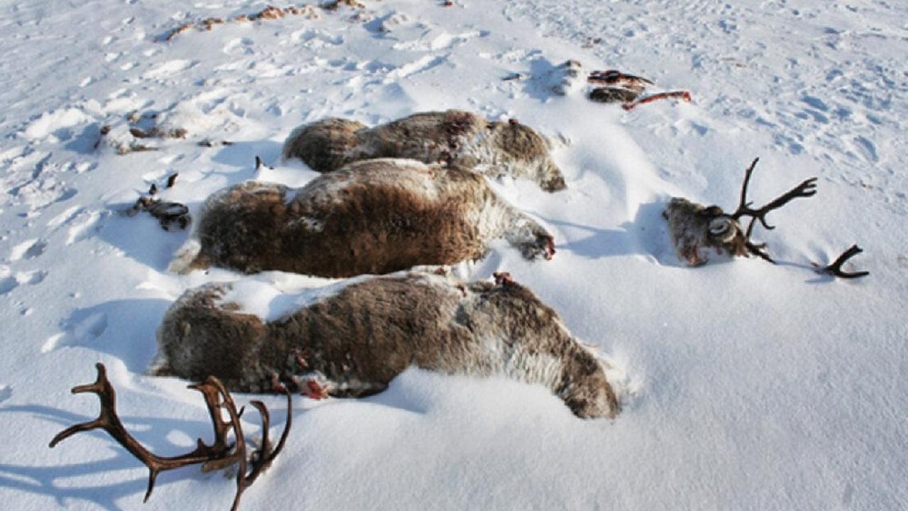 Жуткие кадры: замерзших и слабых лошадей нашли в поле