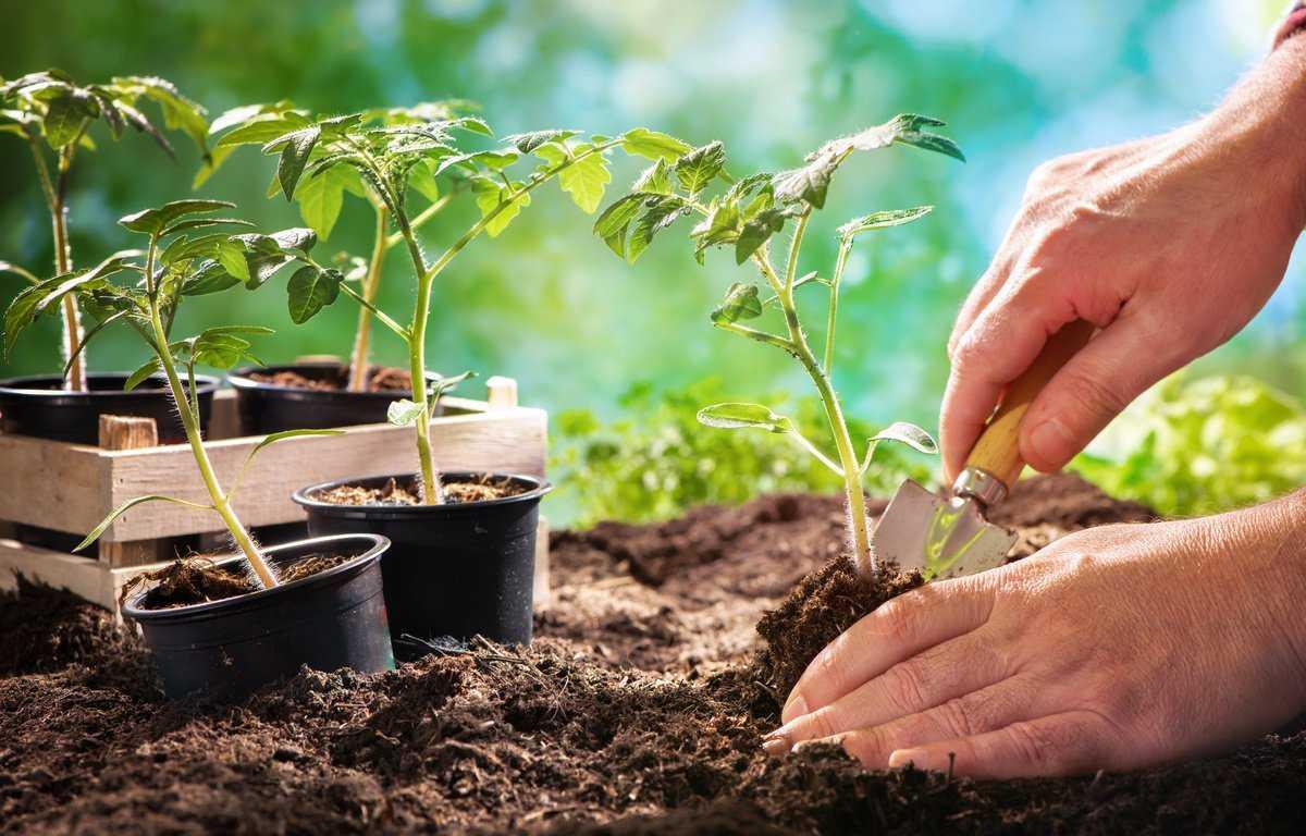Лунный календарь на март: благоприятные дни для посадки растений