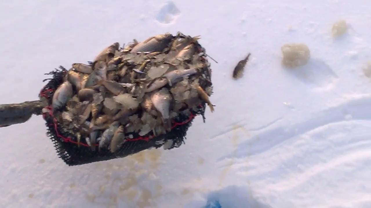 Рыбалка с лопатой: необычный способ ловли удивил пользователей соцсетей (ВИДЕО)