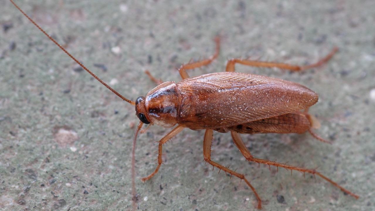 Массовое нашествие тараканов напугало жителей города на Урале ВИДЕО
