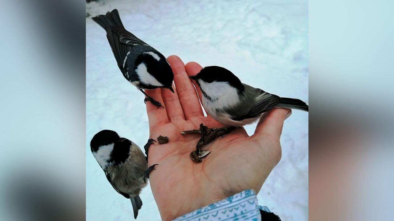 Какой будет весна: в Челябинской области птицы предсказали погоду