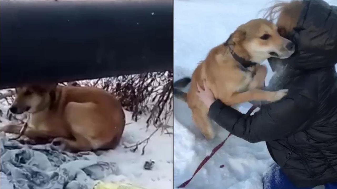 Собака раздора: челябинка встретилась с любимым питомцем, пострадавшим от ревности
