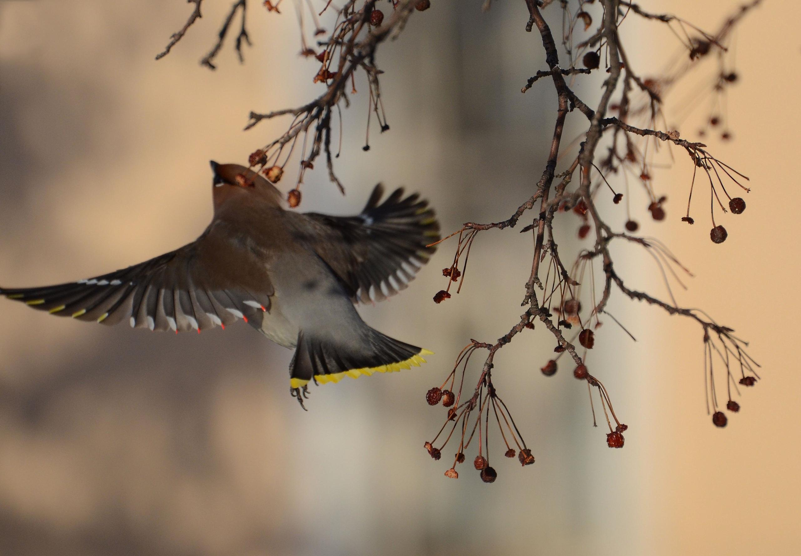 Ярких птиц со зверским аппетитом заметили в Челябинске