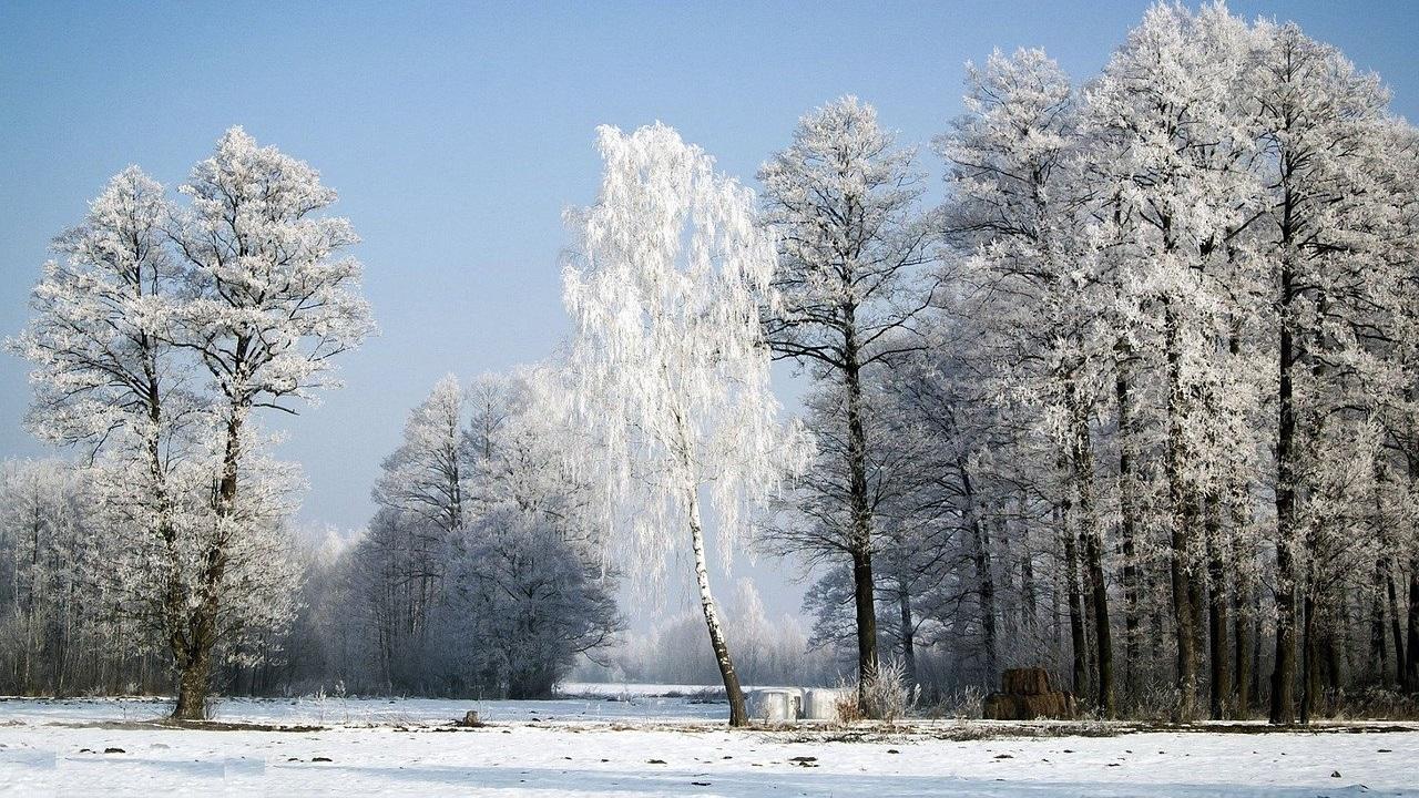 Как работают школы 25 февраля, объявили в Челябинской области