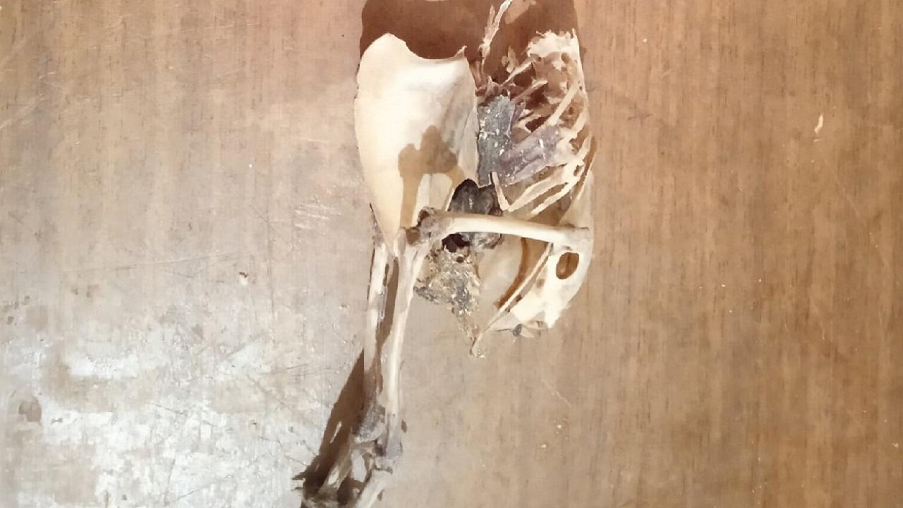 """""""Неизвестное существо"""": странный скелет нашли в многоэтажке на Южном Урале"""