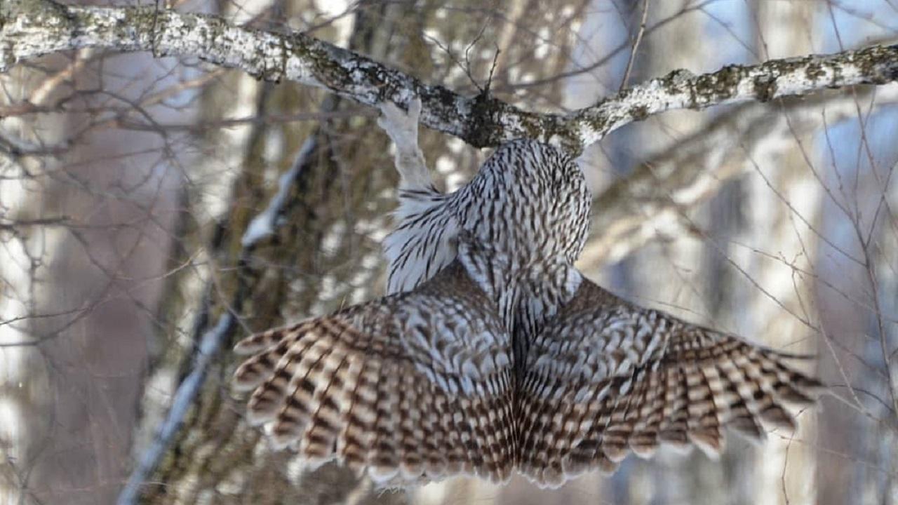 Птиц с «добрым лицом» заметили в Челябинской области