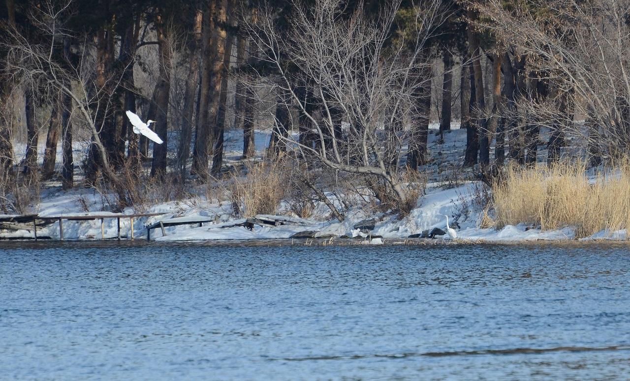 Принесли весну: редкие и изящные птицы вернулись на Южный Урал