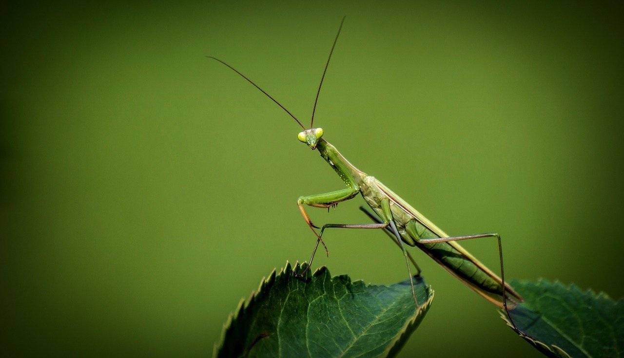 Назревающая катастрофа: как уральские насекомые предупреждают о переменах климата