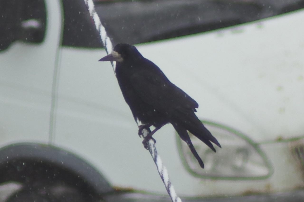 Предвестники весны: умные птицы вернулись на Урал после зимовки