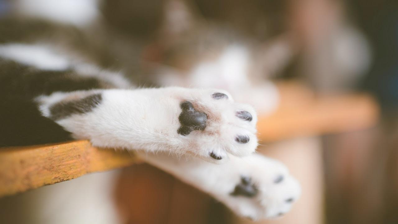 Хитрая, как лиса: самая наглая кошка завелась в монастыре на Урале