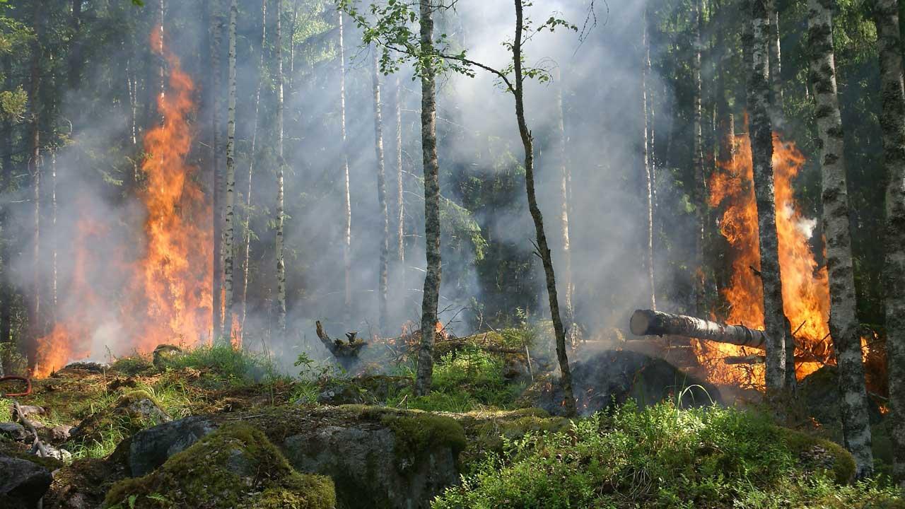 Лесные «хирурги»: что делают со сгоревшими деревьями в Челябинской области