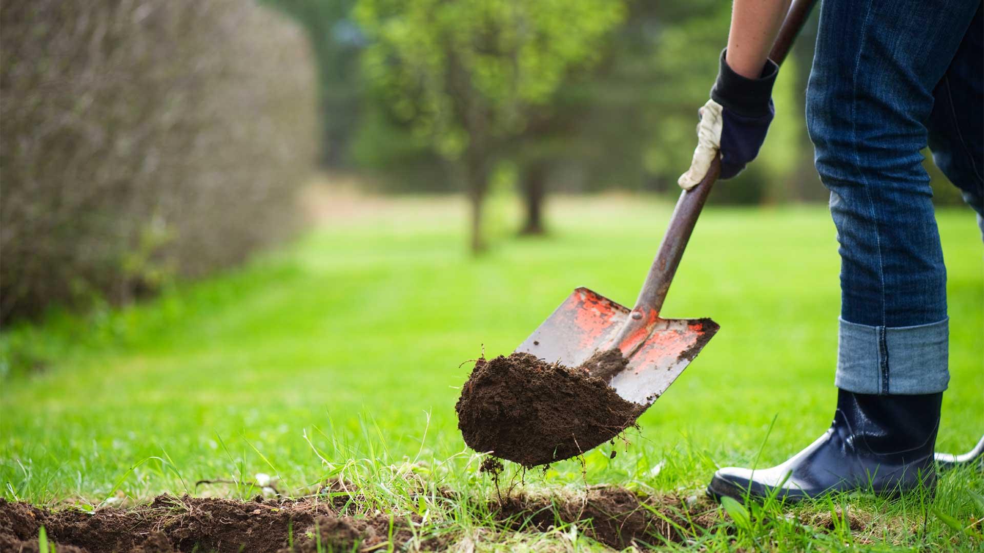 25 задач на март, которые сделают ваш сад идеальным