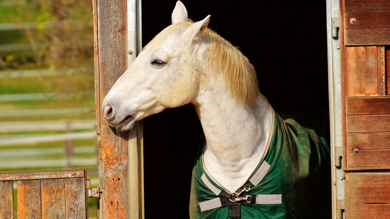 Лошадь укусила годовалого ребенка в Челябинской области