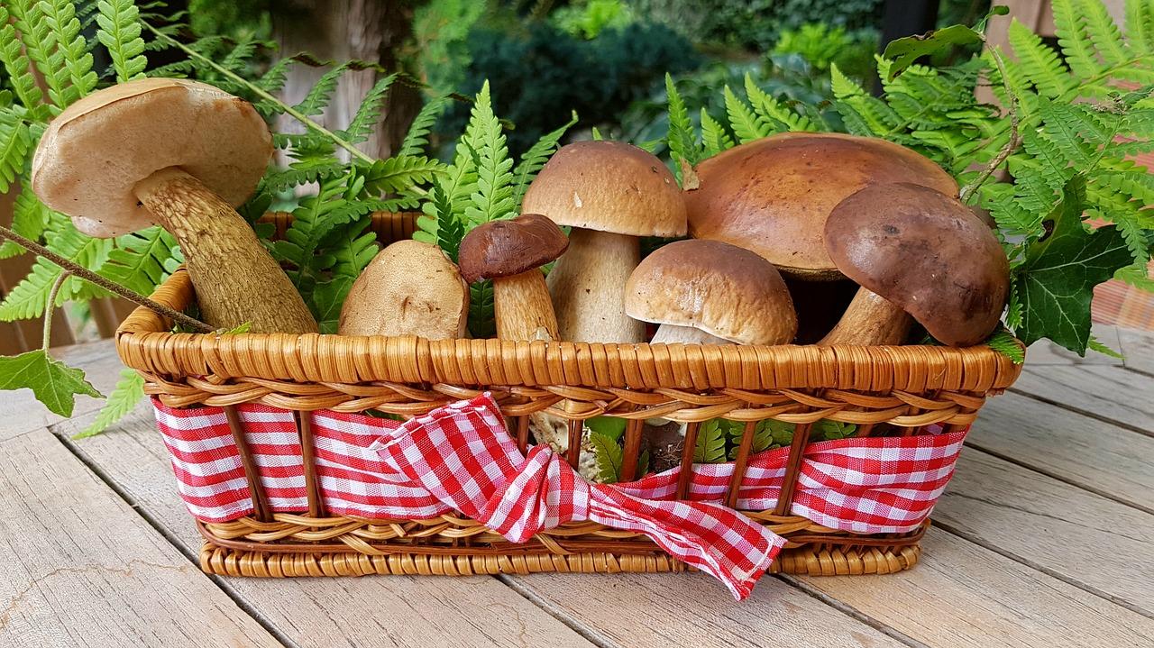 Заменяют солнце: специалисты назвали 3 основных преимущества грибов