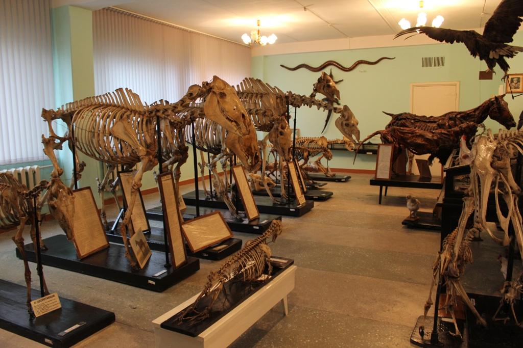 Уникальная коллекция. На Урале хранятся кости мамонта и череп первобытного бизона