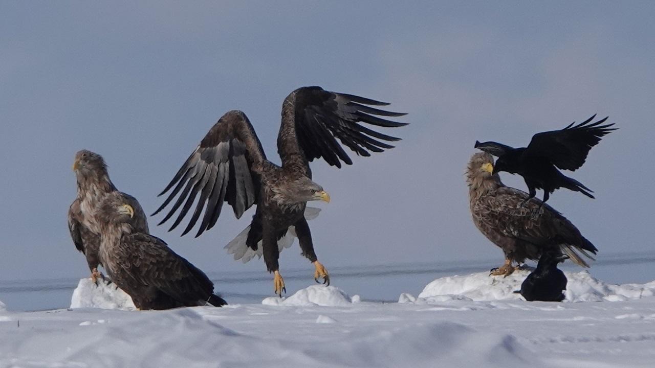 Гигантских и редких хищных птиц заметили на Южном Урале