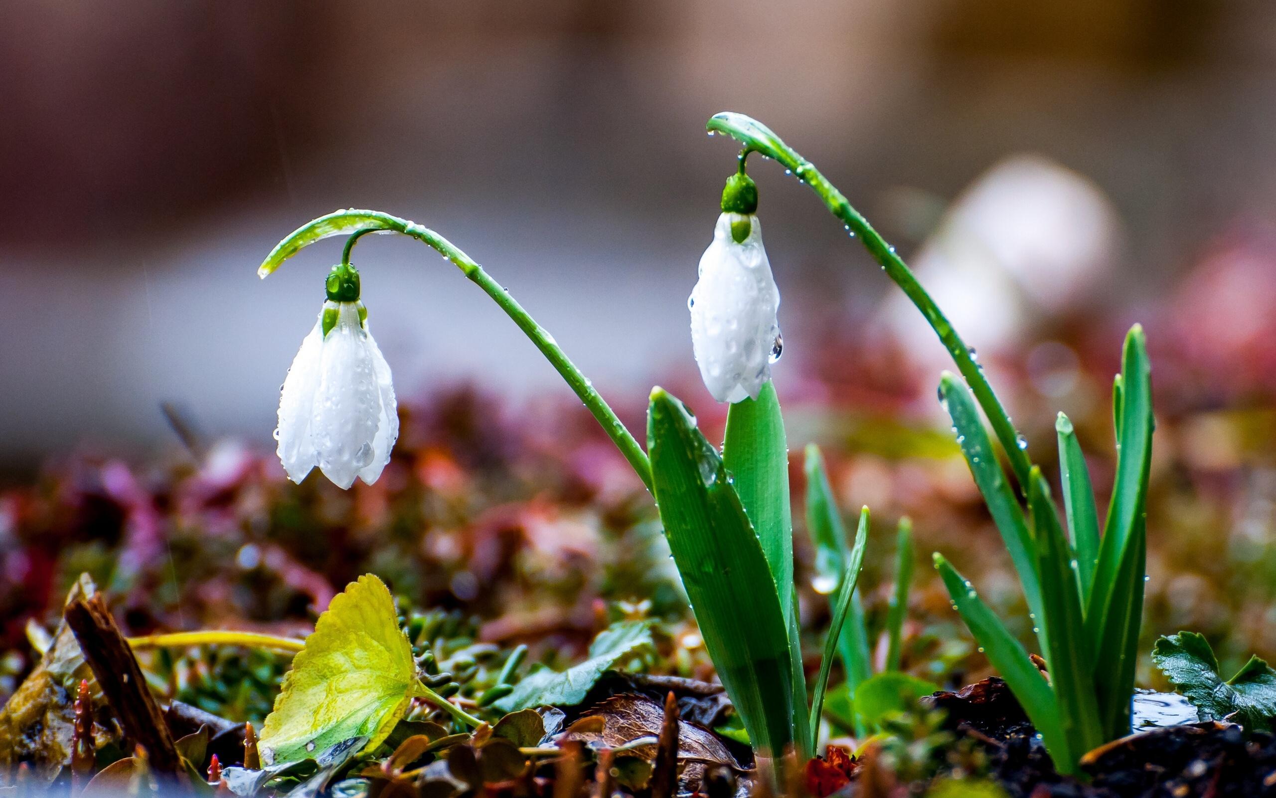 Приметы на 14 марта: как привлечь удачу в день святой Евдокии
