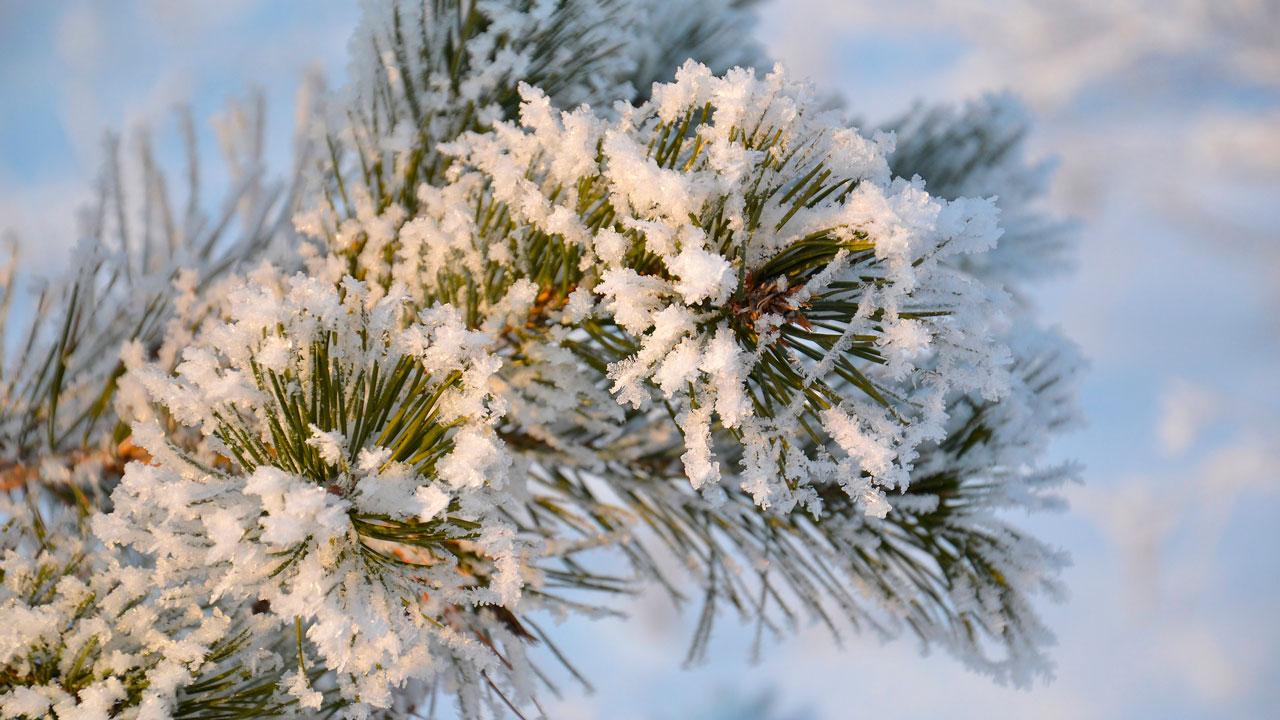 Погода в Челябинске: синоптики составили неутешительный прогноз