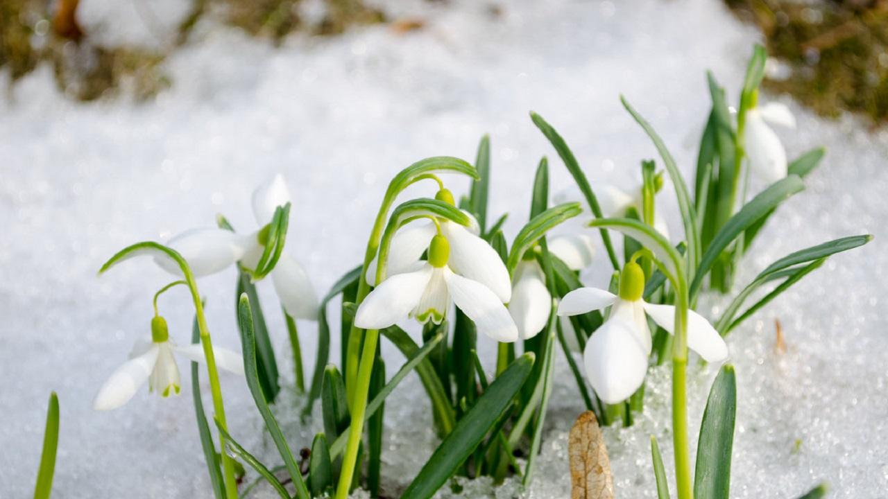 Народные приметы на 22 марта. Как привлечь счастье в дом