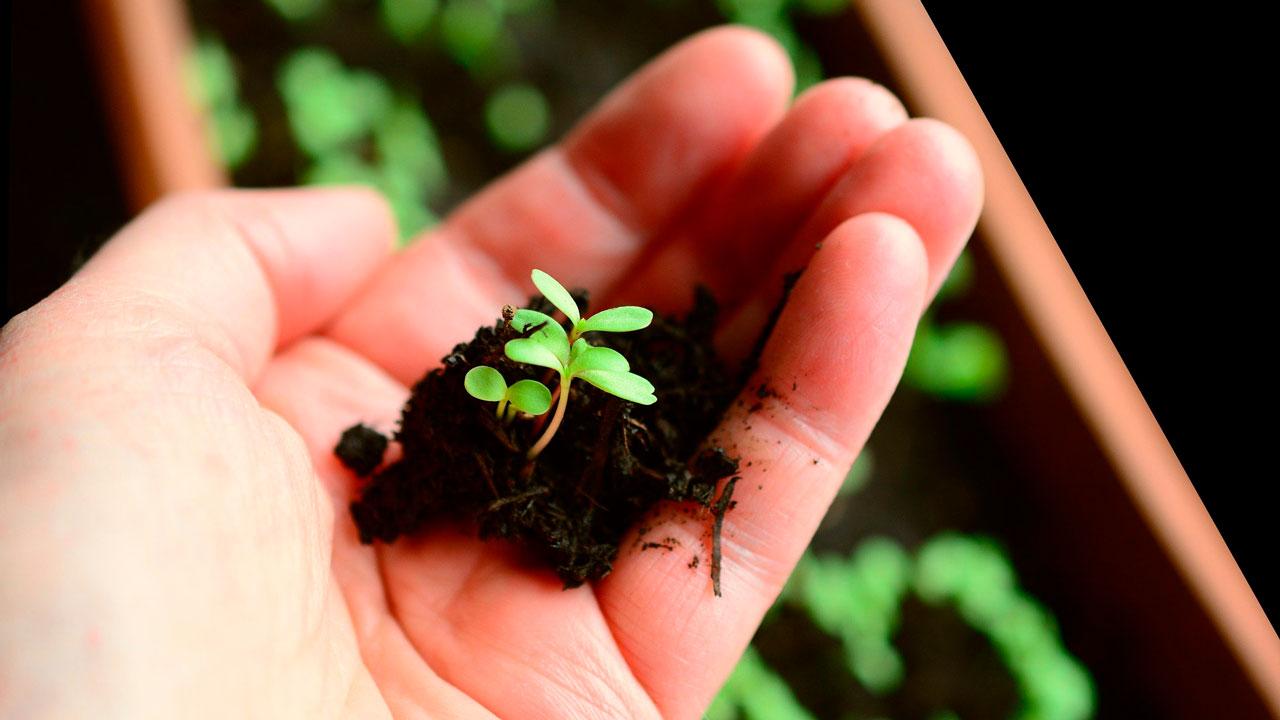 Приметы на 1 мая: что нужно сделать в день Кузьмы Огородника