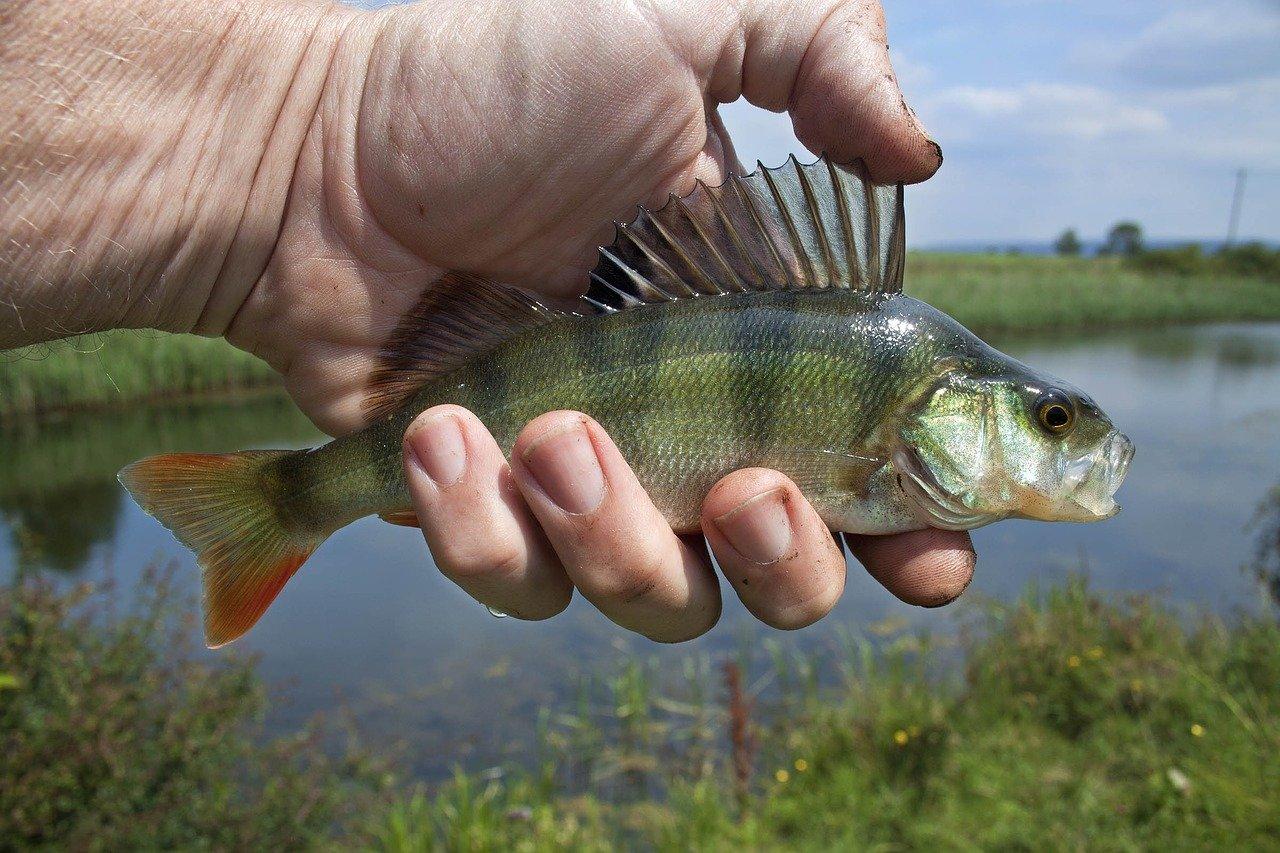 """Новая порода: """"чудо-юдо"""" поймали рыбаки в Челябинске"""